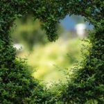 Piękny oraz schludny zieleniec to zasługa wielu godzin spędzonych  w jego zaciszu w trakcie pielegnacji.